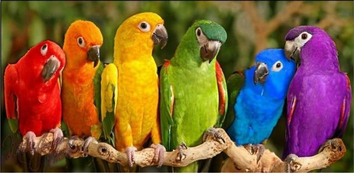 Google Image Result for http://www.damonchernavsky.com/Pictures/Pictures_Of_Animals/rainbow-parrot.jpg