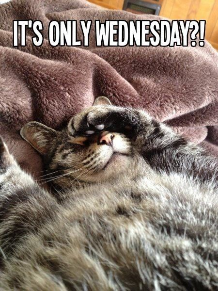 It's only Wednesday quotes quote wednesday wednesday quotes happy wednesday…
