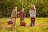 Pick-your-own Farms in NOVA