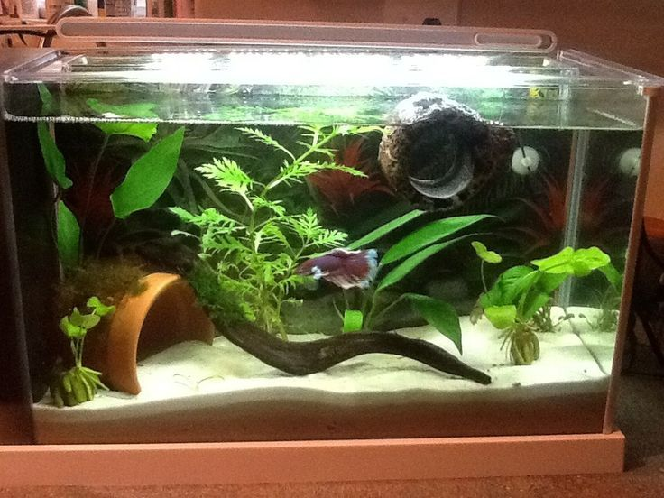 5 Gallon Tank Fluval Spec V Aquarium Kit Aprox 80 Good Betta Tank Water Sprite Anubias Banana Lilly And Dwar Betta Tank Fish Tank Themes Betta Fish Tank