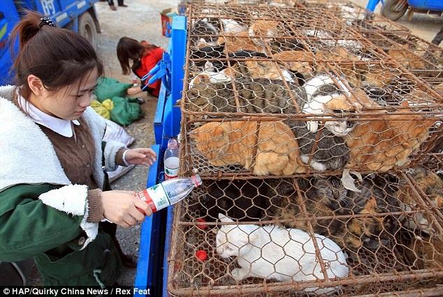 a estos gatitos se los iban a comer en china