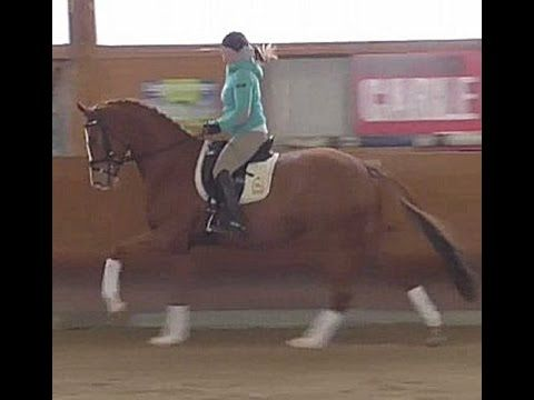 TOP 2011 Hanoverian dressage mare by Imperio 16.2 hh for sale