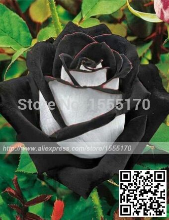 Cheap flower seed prices, Buy Quality flower girl and ring bearer directly from China seeds flowering plants Suppliers:       Free Shipping 50 Seeds China Rare Black Rose FlowerUS $ 0.50/lot500 pcs/bag,Rose seed, variety complete, rose plan