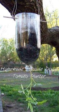 "DIY ""Topsy Turvy"" Upside Down Tomato Planter: 2 litre bottle, coffee filter, potting soil..."