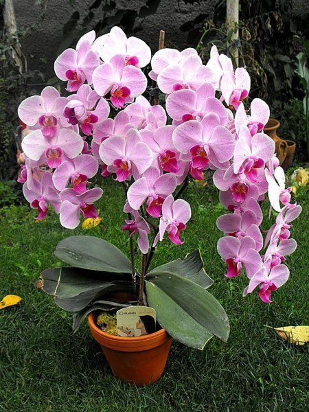 http://balkonada.cafeblog.hu/2014/12/03/orchidea-gondozas-elso-kezbol/