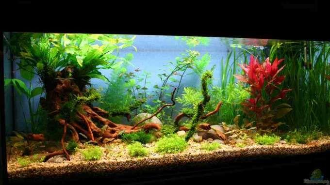 Der User Tom G. stellt sein Aquarium ´Becken 18770´ (Südamerika) mit den Abmessungen 100 X 40 X 40 (160 Liter) mit 22 Bildern vor.