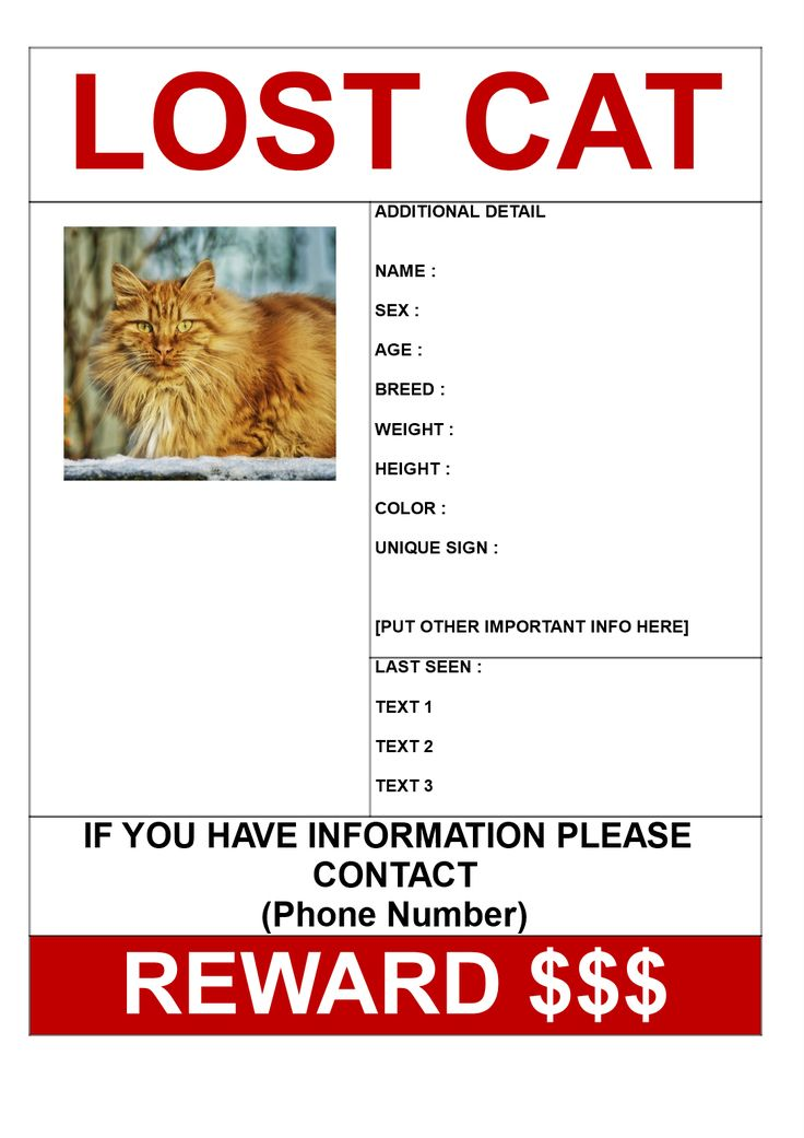 Find Missing Cat Poster with Reward Template - Download this Find Missing Cat poster with reward template if you are looking for a missing cat and need help from other people in your search. Good luck!
