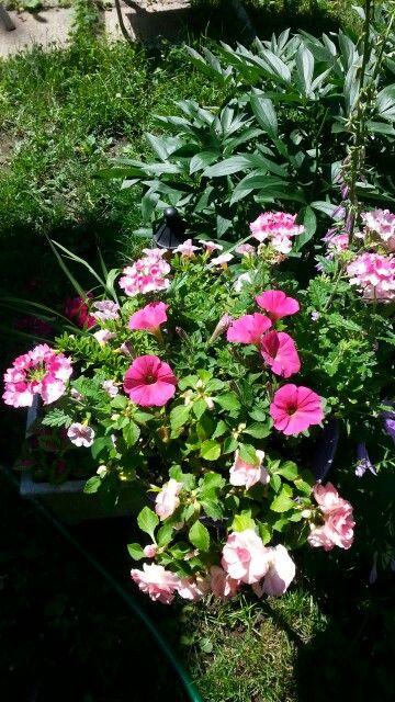 Flower pot 07