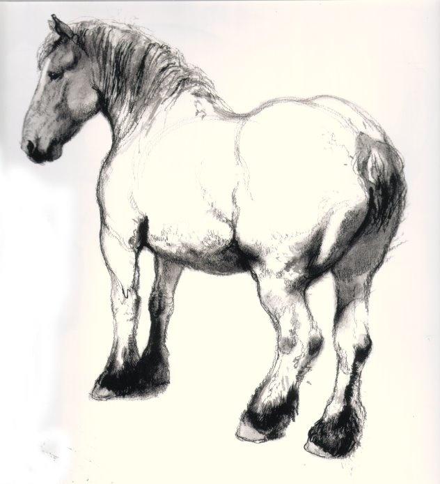 Rien Poortvliet draft horse sketch- one of my favorite artists