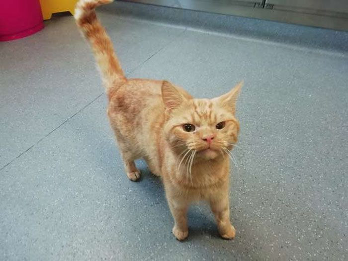 A Man Found The Grumpiest Cat Ever That Was Badly Injured In The Streets Of London Cat Furry Cats And Kittens Cute Cats Photos