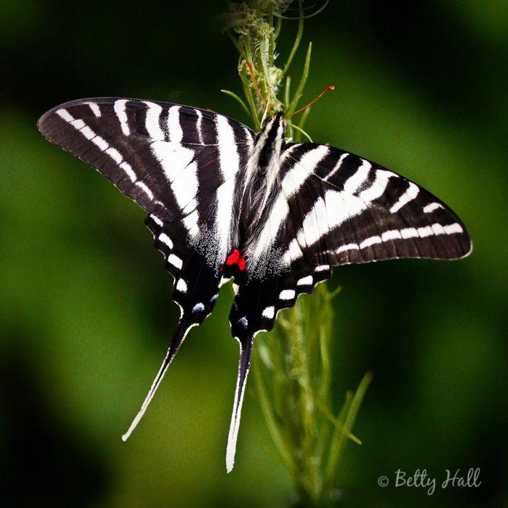 images   butterfly garden  pinterest