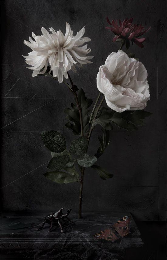Flora Nova (photo: Paul Kilsby)