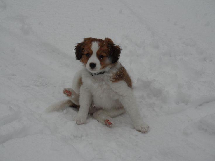 zijn 1e sneeuw