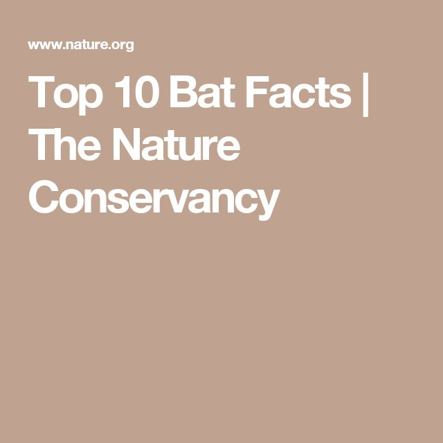 Top 10 Bat Facts | The Nature Conservancy