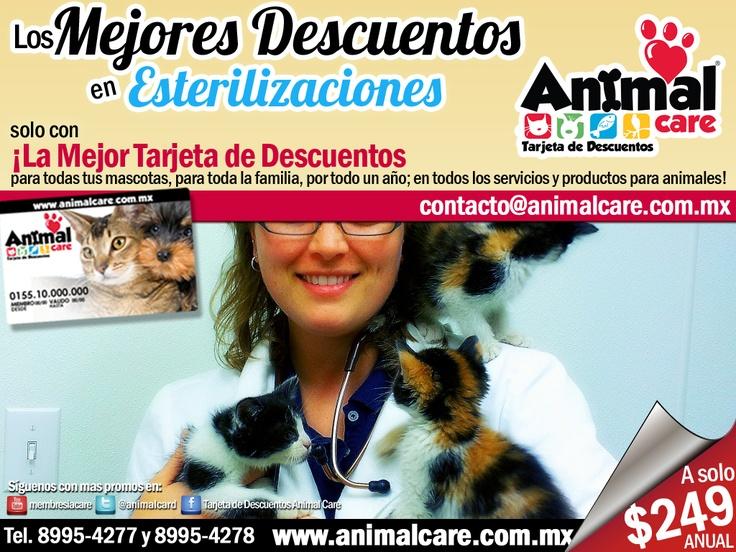 EN ESTERILIZACIONES al presentar la TARJETA DE DESCUENTOS ANIMAL CARE obtienes los mejores descuentos del 10% al 50% en todos los servicios y productos para mascotas, con toda la RED de PROVEEDORES. Checa todos los descuentos en www.animalcare.co... Llámanos al 8995-4277 y 8995-4278 Escribenos a contacto@animalcare.com.mx