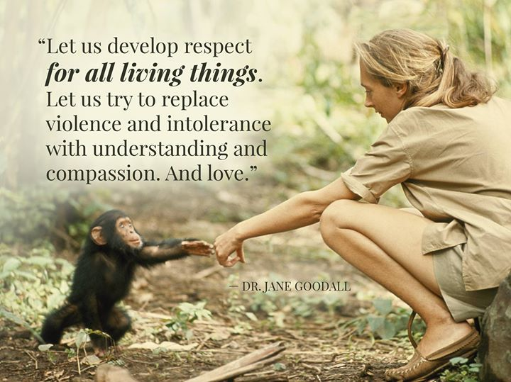"""Let us develop respect for all living things. Let us try to replace violence and intolerance with understanding and compassion. And love."" -Jane Goodall [720 x 539] : QuotesPorn"
