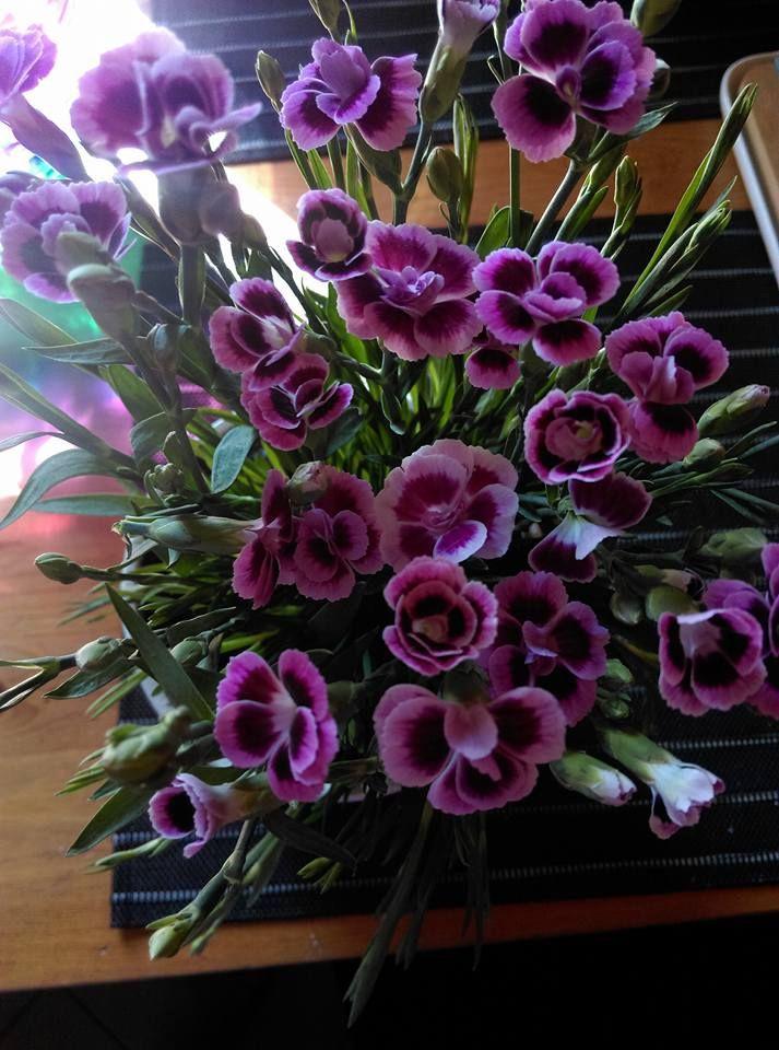 kwiat.jpg (713×960)