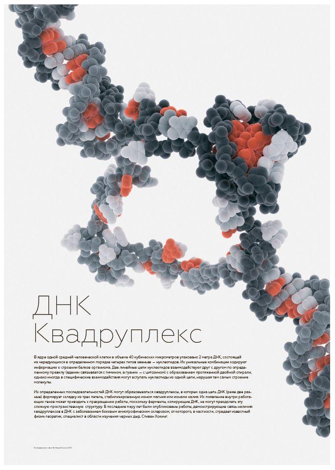Образовательный постер - структура ДНК квадруплекса