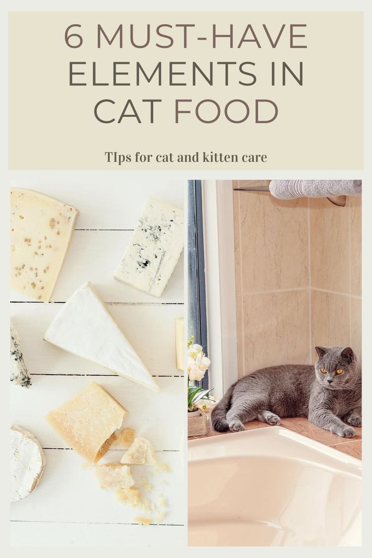 Can Cats Eat Cheese Choose The Right Cat Food In 2020 Diy Cat Food Healthy Cat Food Foods Cats Can Eat