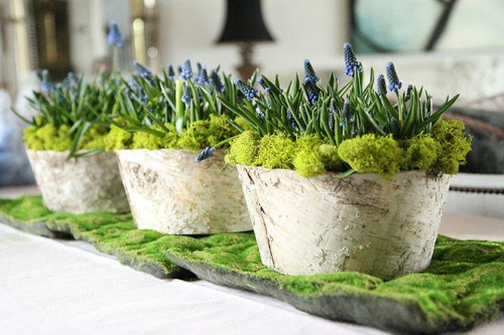 Muscari fleur bleue de printemps, Inspiration décoration de table de printemps par radis rose