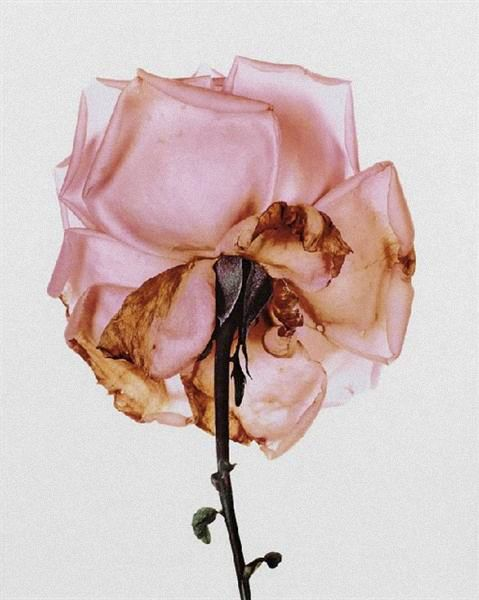 Irving Penn | holeandcornermagazine.com                                                                                                                                                                                 More