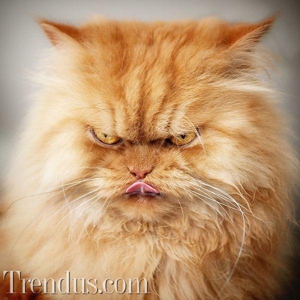 Yüzü hiç gülmeyen kedi