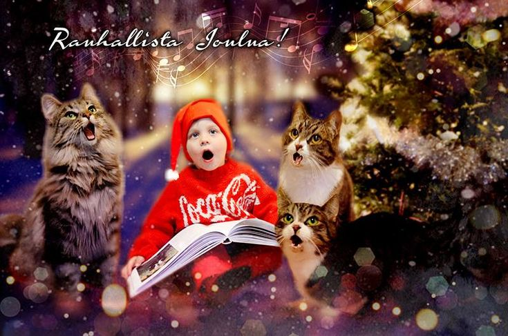 #christmas #card #cats #children #photoshop #saraeleni