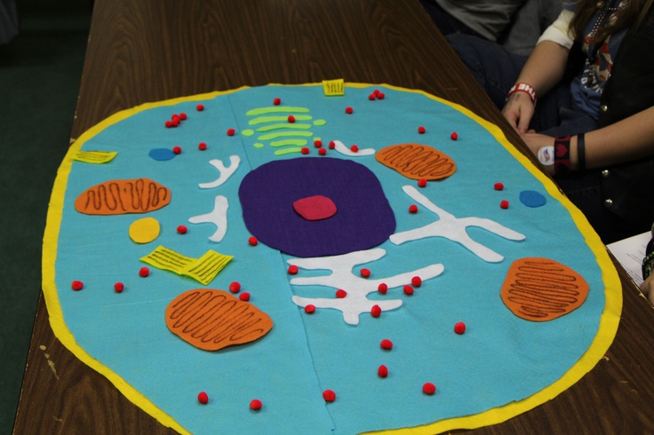 A Fun Cell Activity... make felt cells (with the kids, not doing it myself)... Love this idea!
