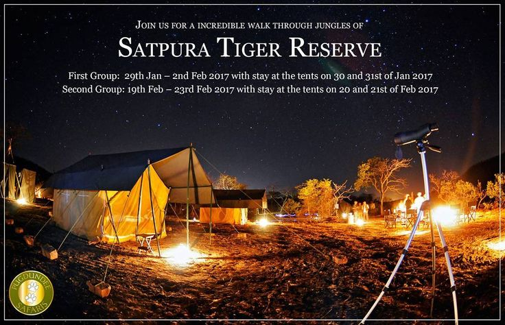 This winters explore the wilderness experience at its very best. Join us for the walking safari which retraces the route followed by the British explorer Captain J Forsyth in the 1860s. This safari offers high adventure opportunity to view animals of the Indian jungle on foot beautiful streams and rivers tribal villages and an opportunity to camp in Tiger country.  #withpugdundee #wildlifeholiday #walkingsafari #Satpura #closetonature #WinterGetaways #adventure #camping #safariholiday…