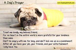 A dog's prayer. Hope we all answer it.  #dogs #petsarefamily #Nocruelty #lovedogs #pugs #headsupfortails #care #prayers