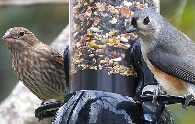 The Best Bird Feeders | The Droll Yankees 18-Inch Onyx Mixed Seed Tube Bird Feeder with Removable Base is the best all-around bird feeder for most people. Of all the models we tested, the Onyx was the sturdiest and best-built bird feeder we came across.