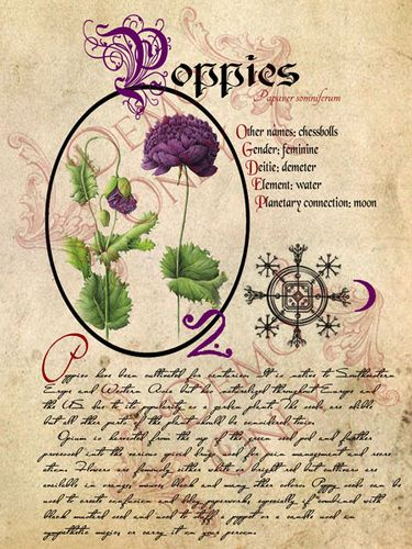BOS ~ herb pages; Poppies Follow the link to more herbs to add to your BOS... last I looked there was over 20 different herbs all beautifully illustrated like this one