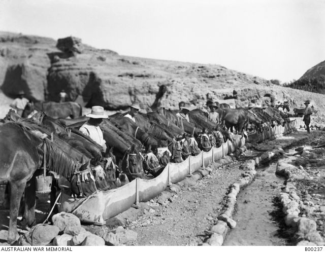 Watering horses of A Squadron, 9th Australian Light Horse from a canvas trough, at Ain Duk, in the Jordan Valley.