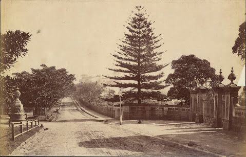 woolloomooloo gate royal botanic gardens - Google Search