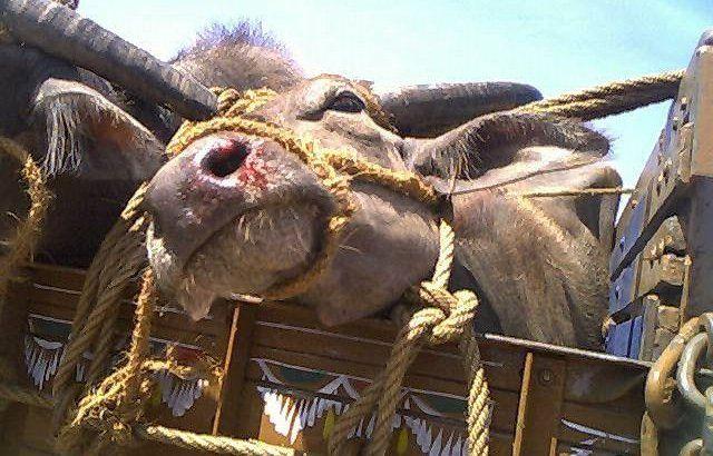 Petition · Akbaruddin Owaisi's hate speech promoted cow slaughter - Naresh Kadian · Change.org