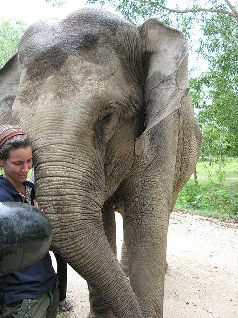 Phnom Tamao Wildlife Rescue Center Tour, Phnom Pehn, Cambodia | The Everywhereist