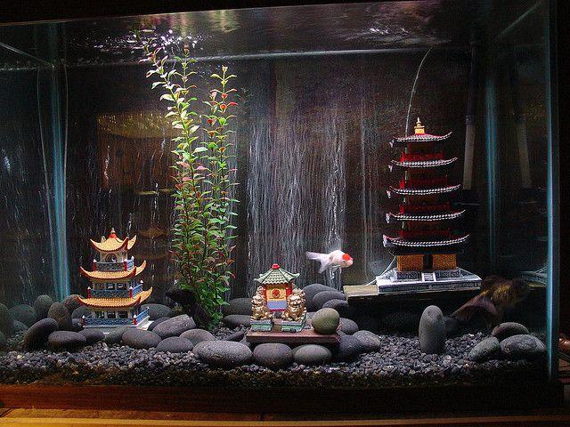 17 best images about gorgeous goldfish on pinterest pet for Betta fish decor