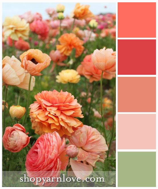 1000+ Images About Yarn Love Color Palettes On Pinterest