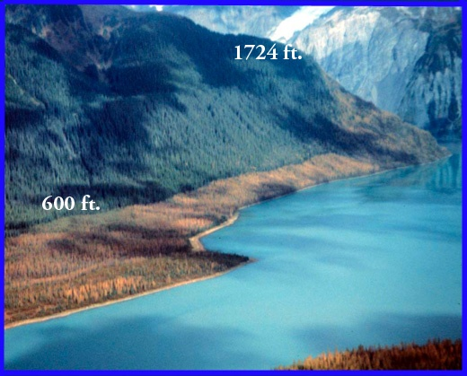 Tree kill line of demarcation, caused by megatsunami in Lituya Bay, Alaska.  1958