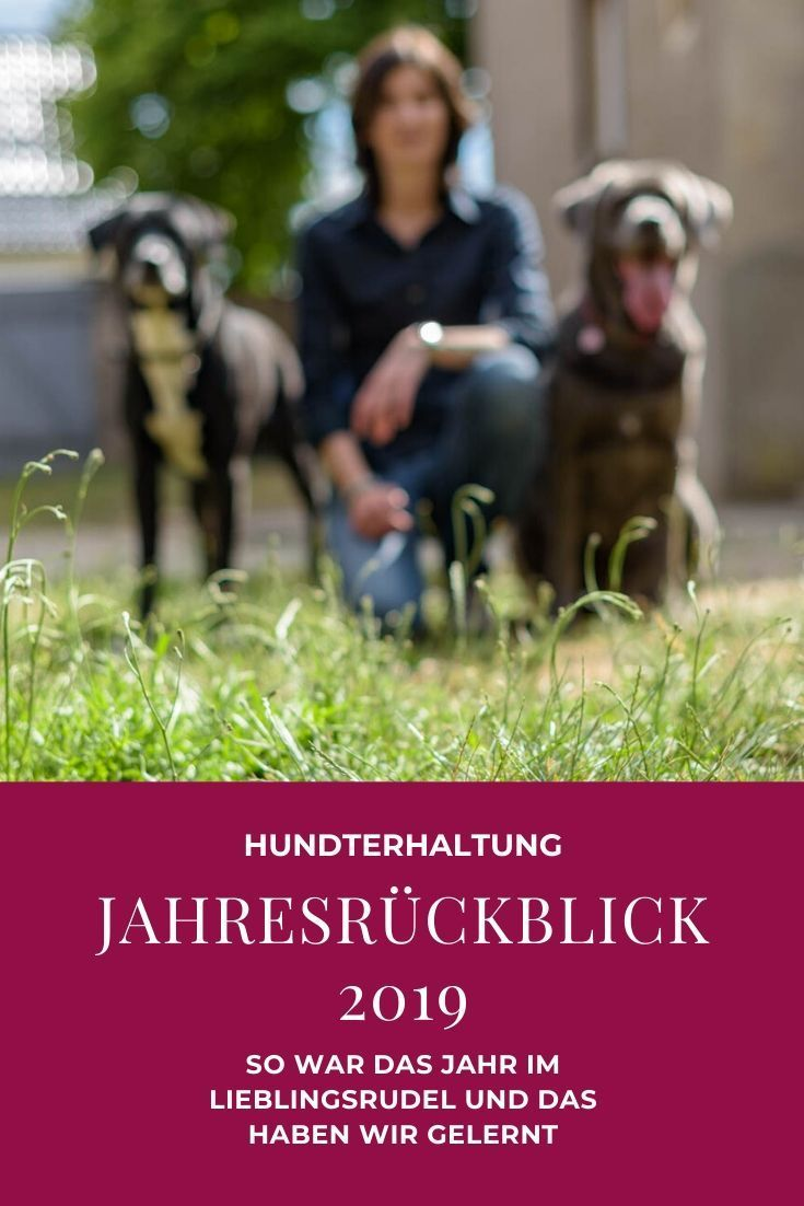 Jahresruckblick 2019 Silvester Mit Hund Hundetraining Hundchen Training