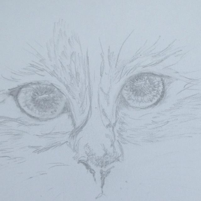 Kattögon. Ritat av Linnea Gelfgren -12