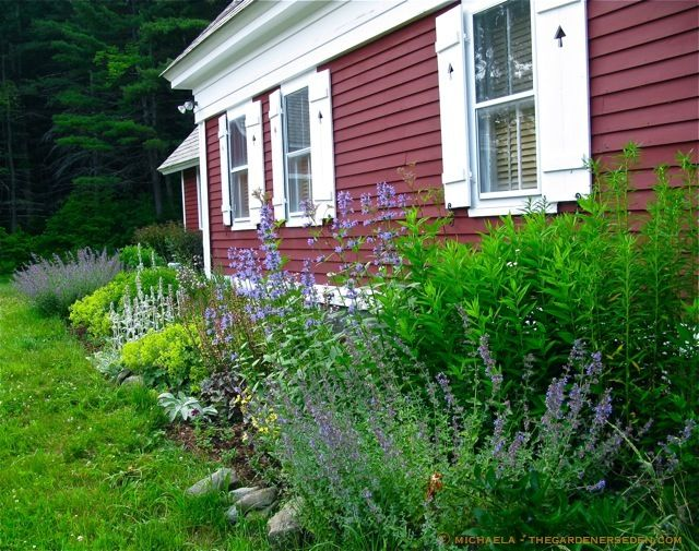 21 best images about garden maintenance tips on pinterest for Easy to maintain garden borders