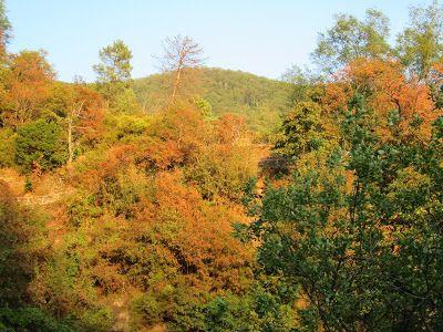 Raccontare un paese: come foglie d'autunno...