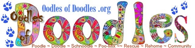 OodlesofDoodles.org Oodles of Doodles-RESCUE/REHOME RESOURCE for Poodle-mixes, Doodles, Labradoodle & Goldendoodle for adoption/rescue/rehome & Forum-Since 2009