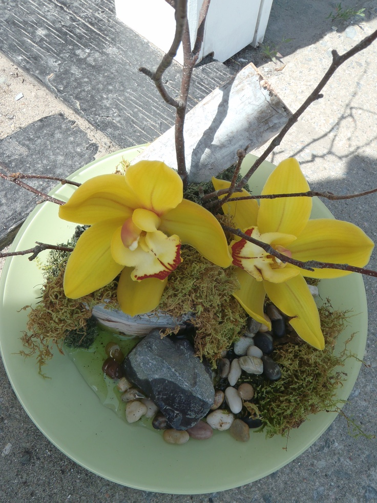 Yellow Cymbidium Orchids resting in a bowl of natural moss, stones and birch bark