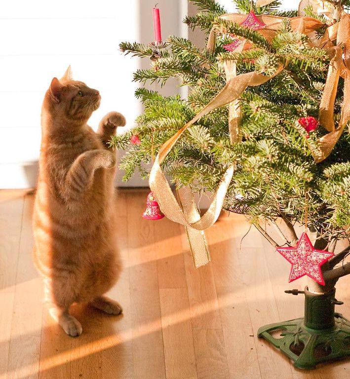 479 best fun holiday cats christmas cats images on for Interesting cat trees