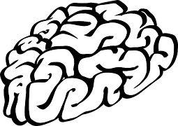 Hjärnan, Trodde, Biologi, Mänskliga