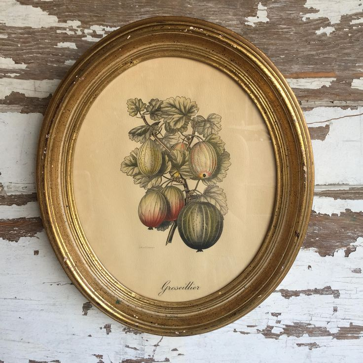 Vintage Botanical Print Gooseberries by Severeyns - Oval Picture Frames - Tinted Lithograph by TheClassicButterfly on Etsy