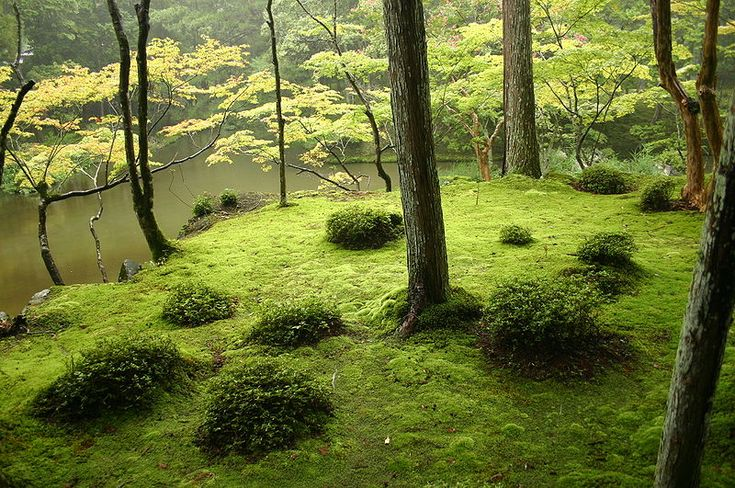 We have more moss than grass. I think we may go with it. Good inspiration here.