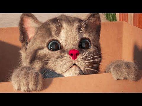 Little Kitten My Favorite Cat Play Fun Kitten Pet Care Animation Games For Children By Fox Sheep Https Www Cutekittensvideos Com 155130 Littl Aplikasi
